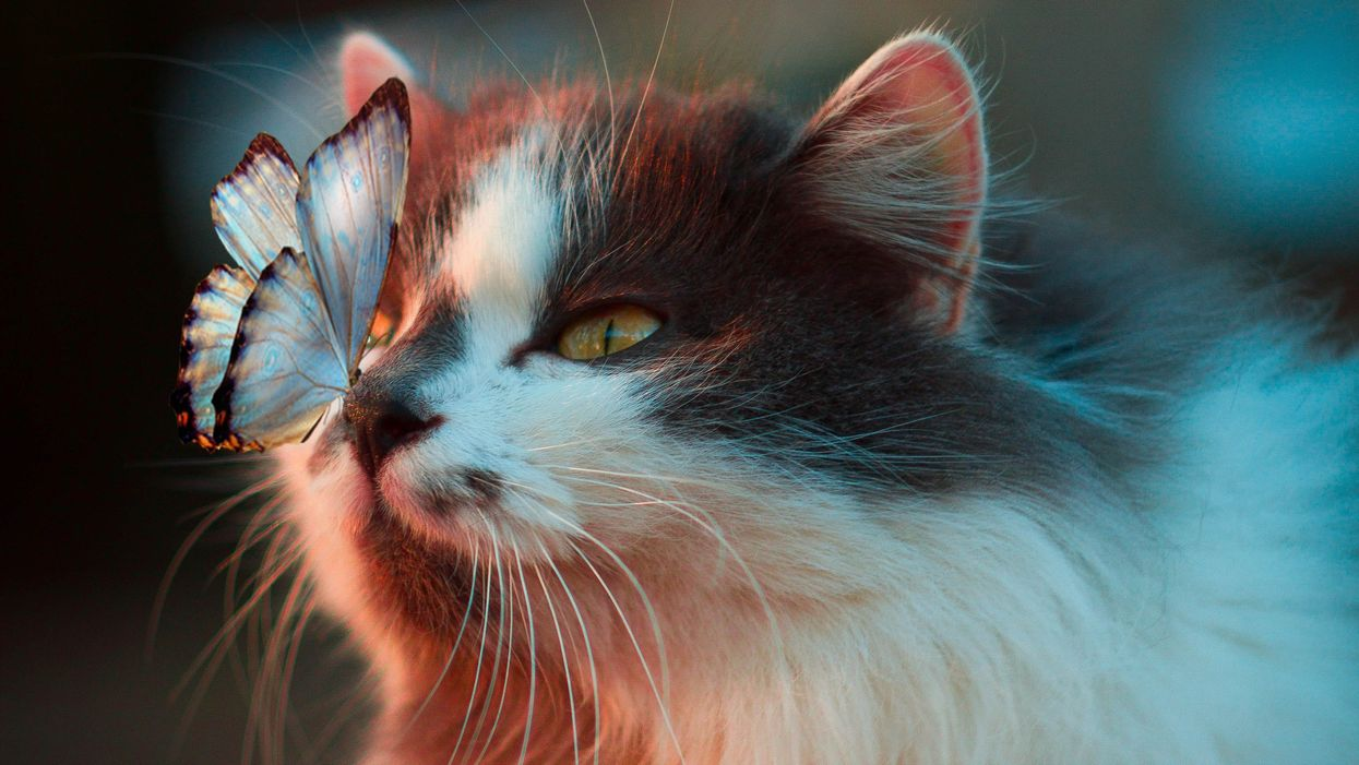 How pets relieve anxiety and anger