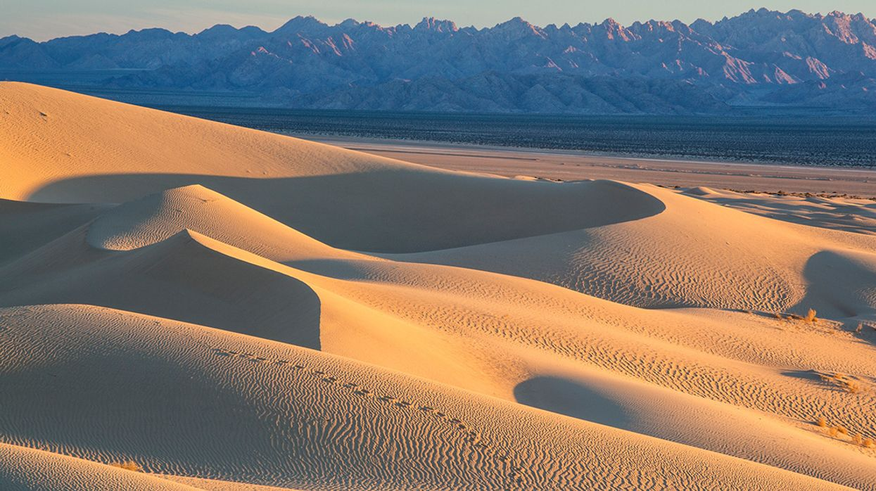 Fighting a Corporate Scheme to Sell the Mojave Desert's Water