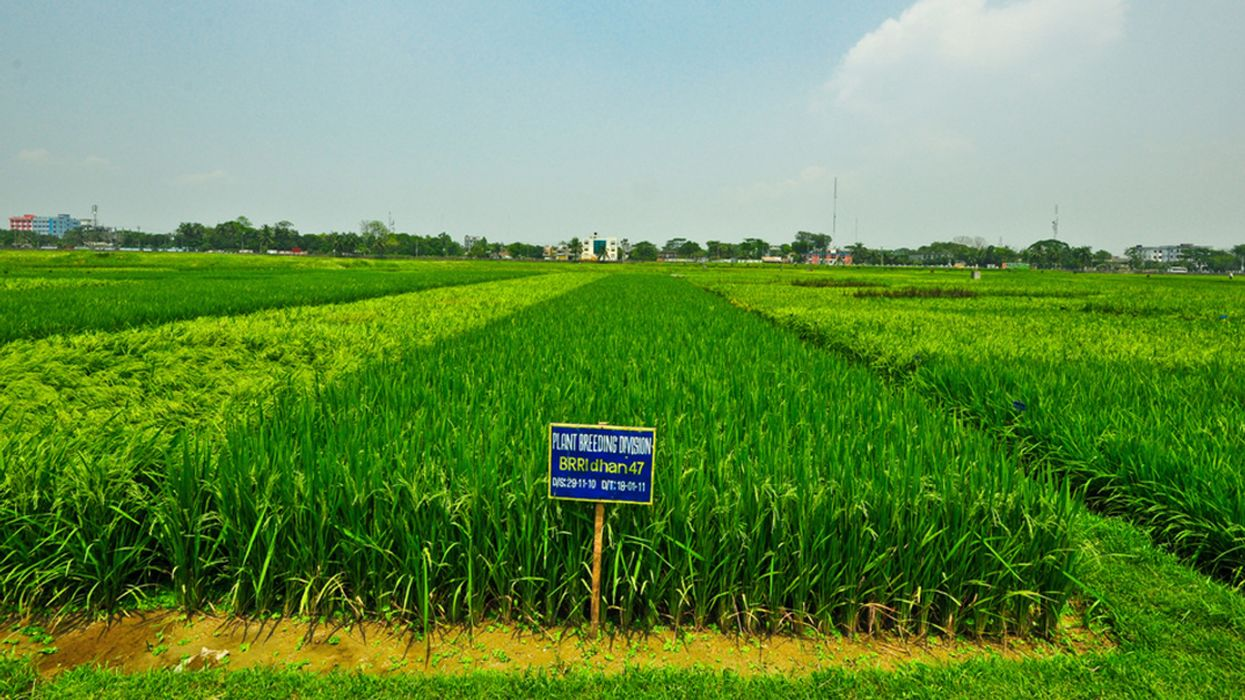 Climate Change Makes Soils Saltier, Forcing Farmers to Find New Livelihoods