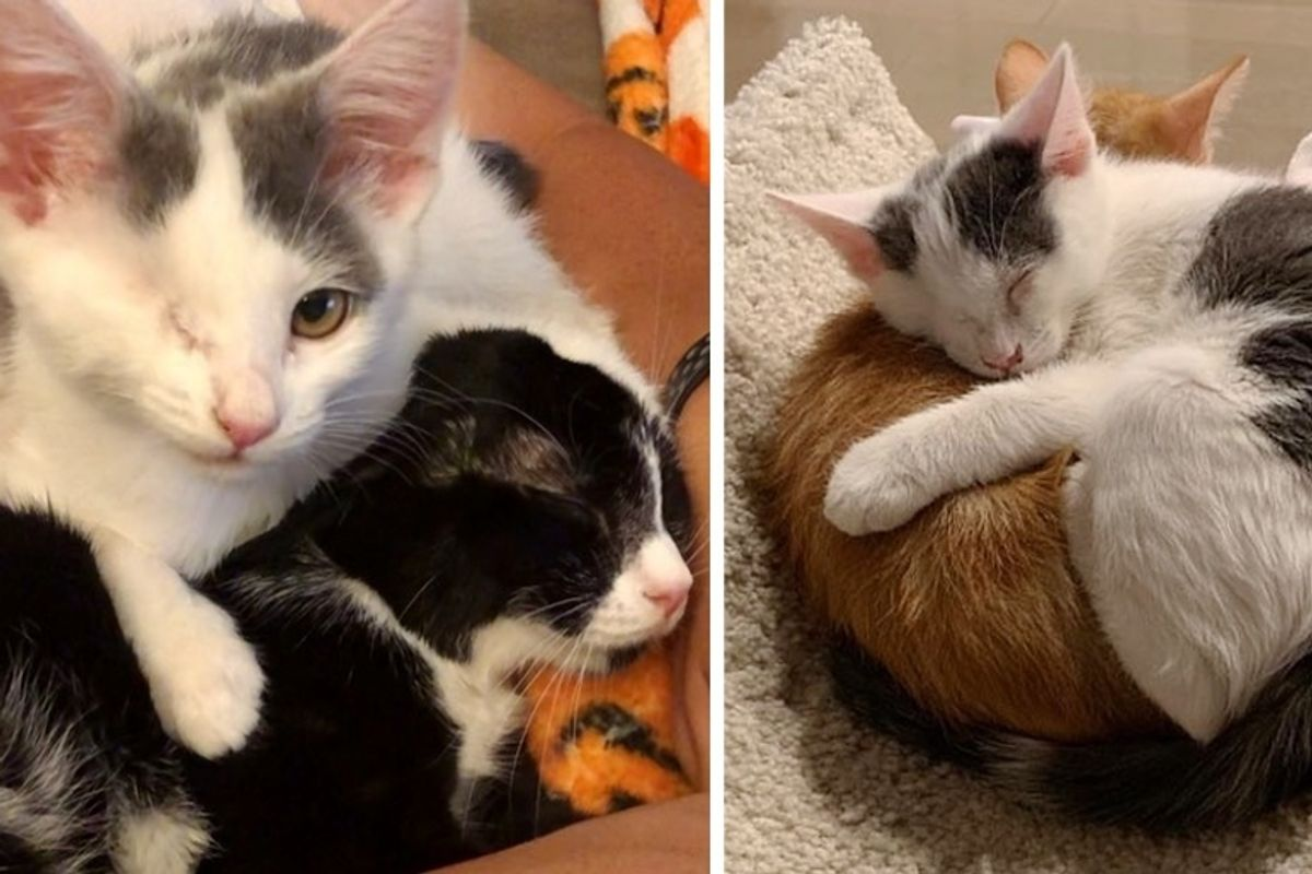 Kitten with One Eye Cuddles Everyone Around Her After She was Rescued from Uncertain Fate