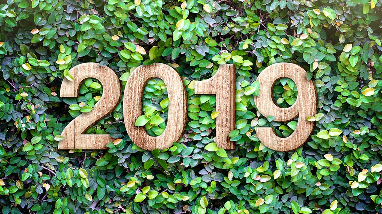 Green New Year's Resolutions From the EcoWatch Team