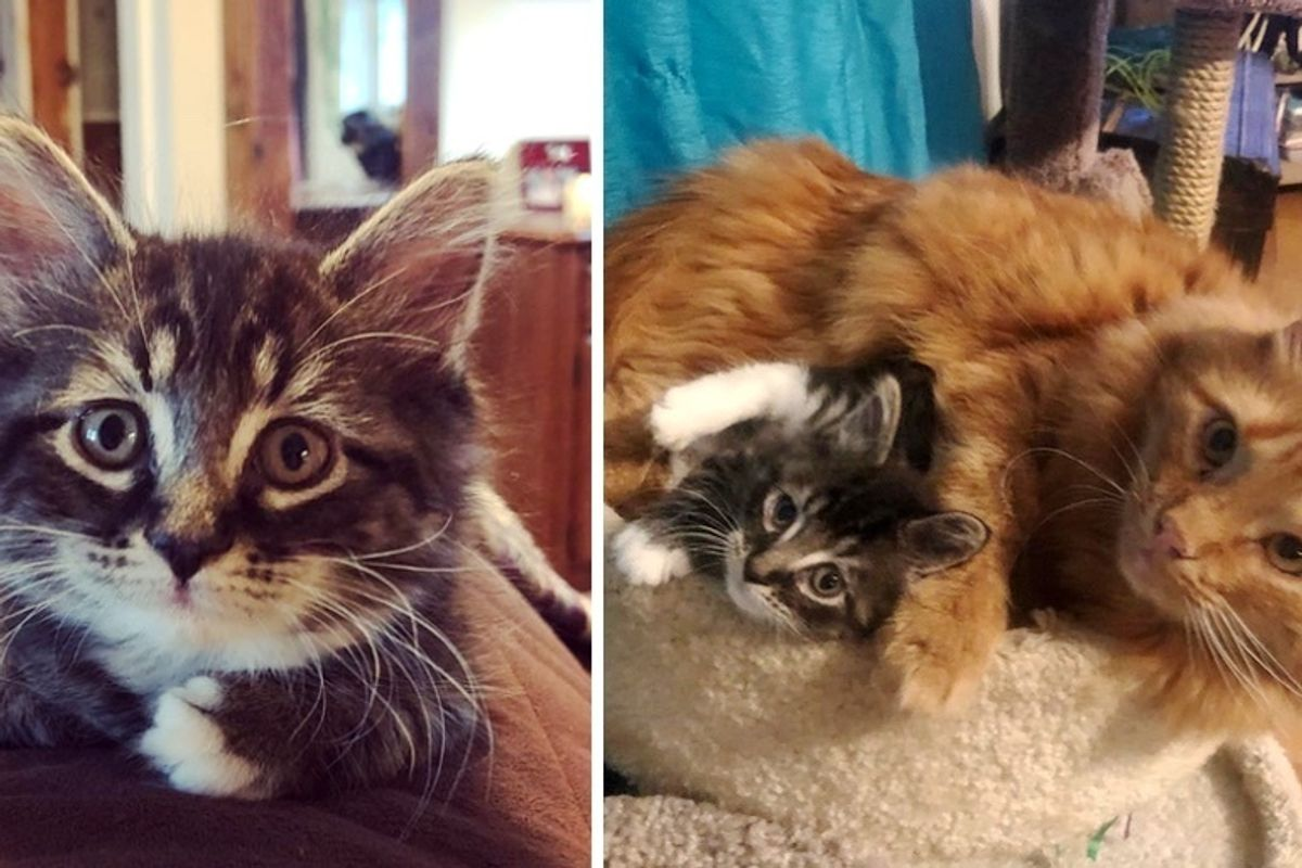 Cats Adopt Little Kitten Who Needed a Home, and Raise Her as Their Own