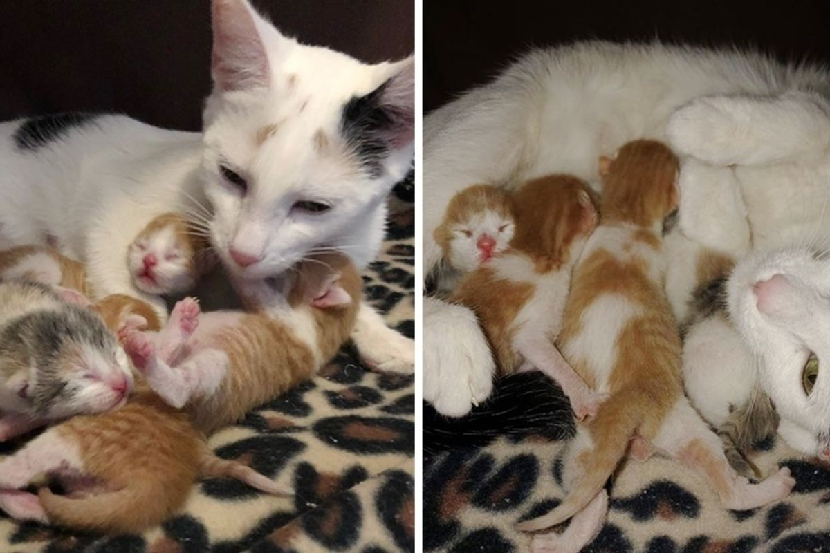 Rescued Cat and Her Newborn Kittens Find Safe Home Right Before New Year's Eve