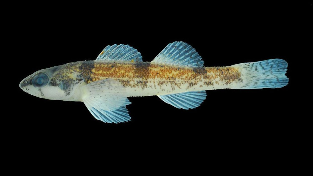 Small Colorful Fish Gets Endangered Species Protection