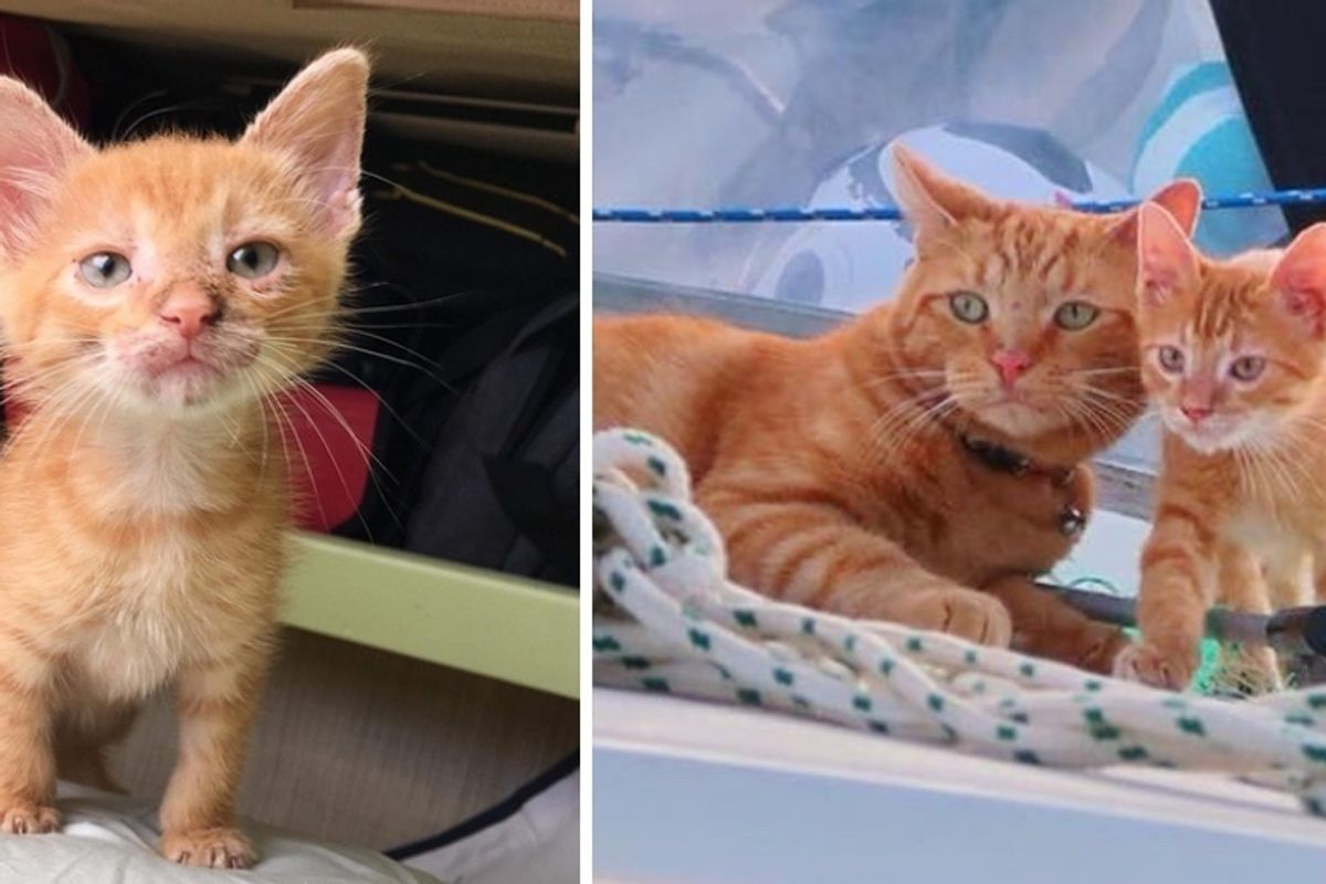 Rescued Kitten Who Needed a Home, Finds Sailor Cat Who Wanted a Friend