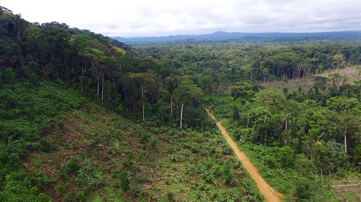 Palm Oil Sourcing Should Be Disclosed to Consumers, Sustainability Study Recommends