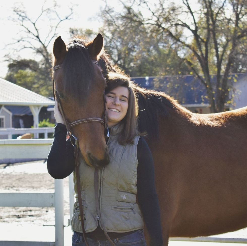 5 Ways To Prepare Your Horse For Lease While You're At Uni