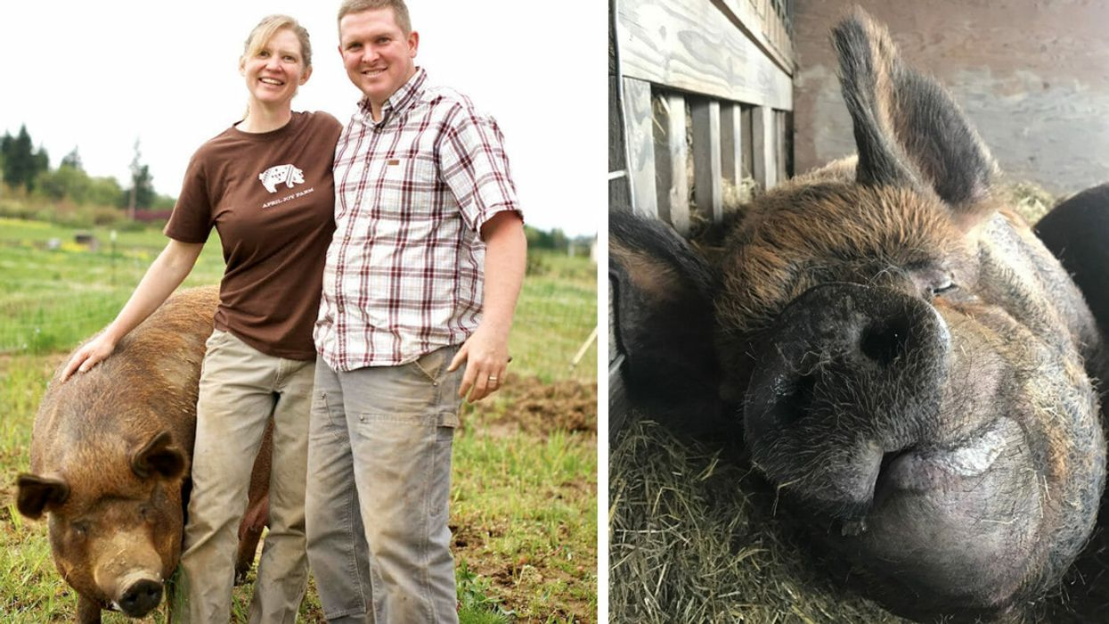 This Is the First Farm in the Pacific Northwest to Be Animal Welfare Approved