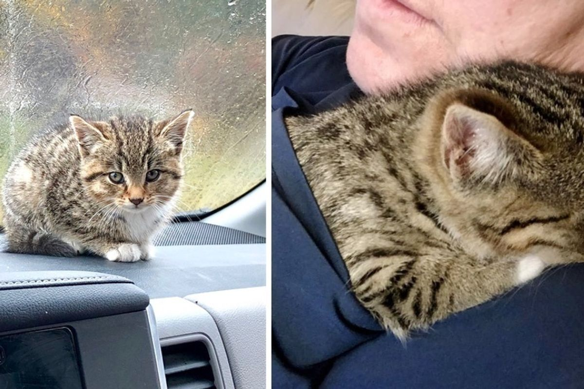 Woman Saves Kitten Abandoned in Parking Lot and Finds Her a New Friend She Always Wanted
