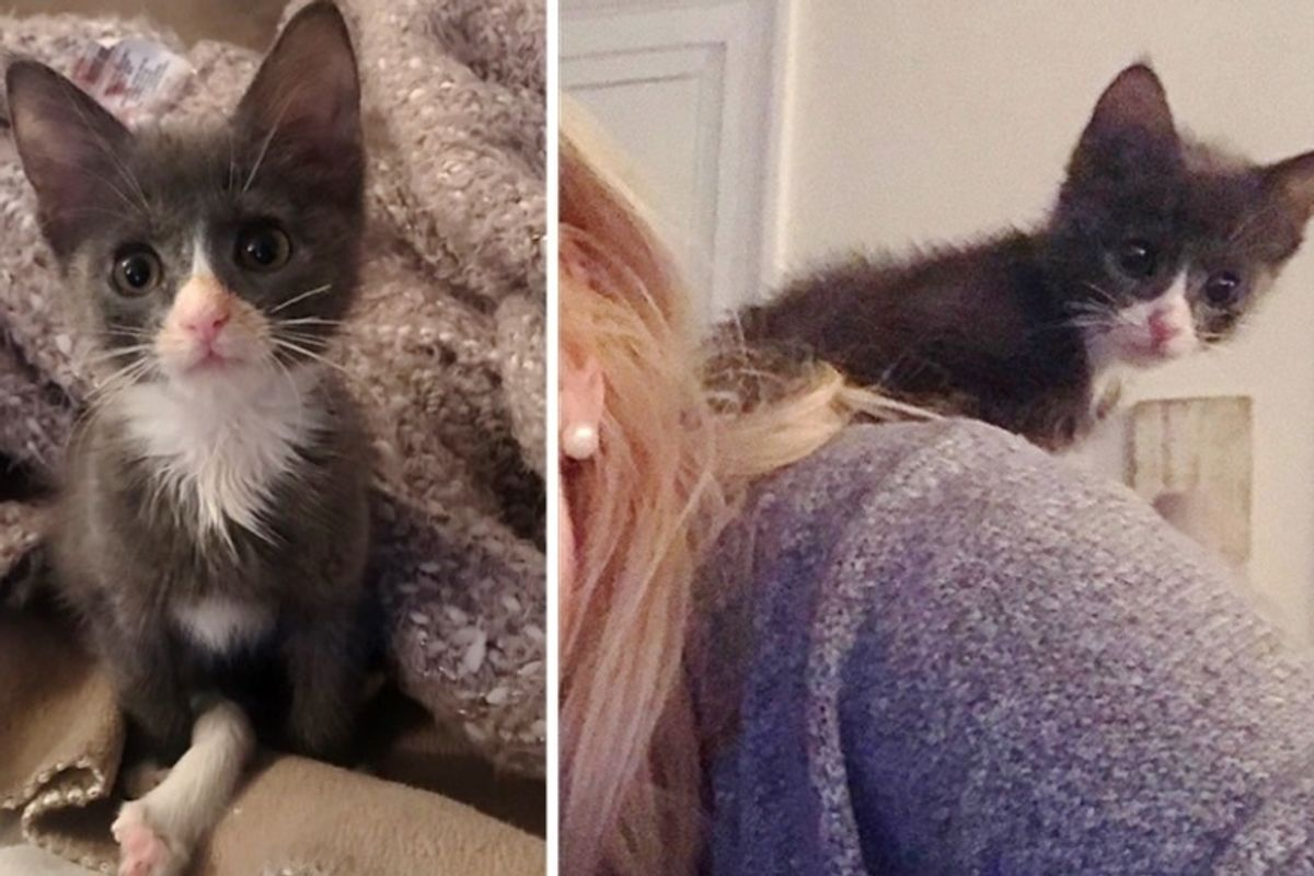 Kitten Born with Extra Long Leg Proves She Can Do Anything Just Like Other Cats