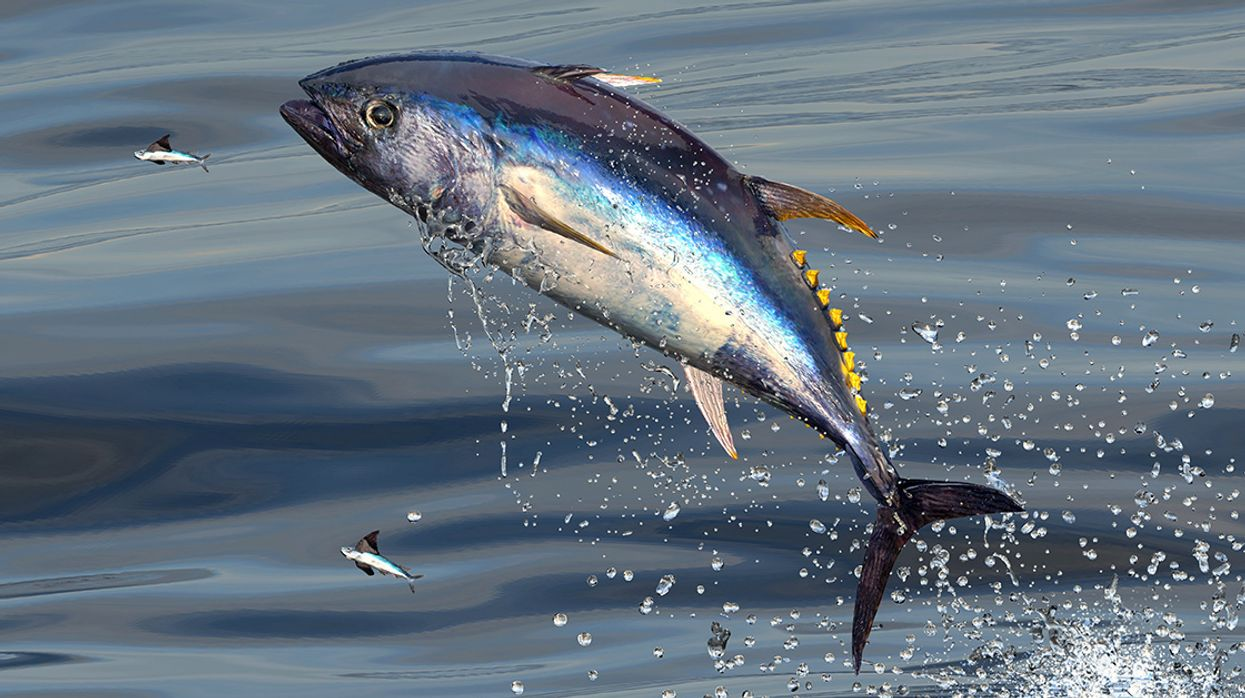 EcoWatch Exclusive: Ocean Conservation Expert Carl Safina on the Tuna That Sold for $3 Million