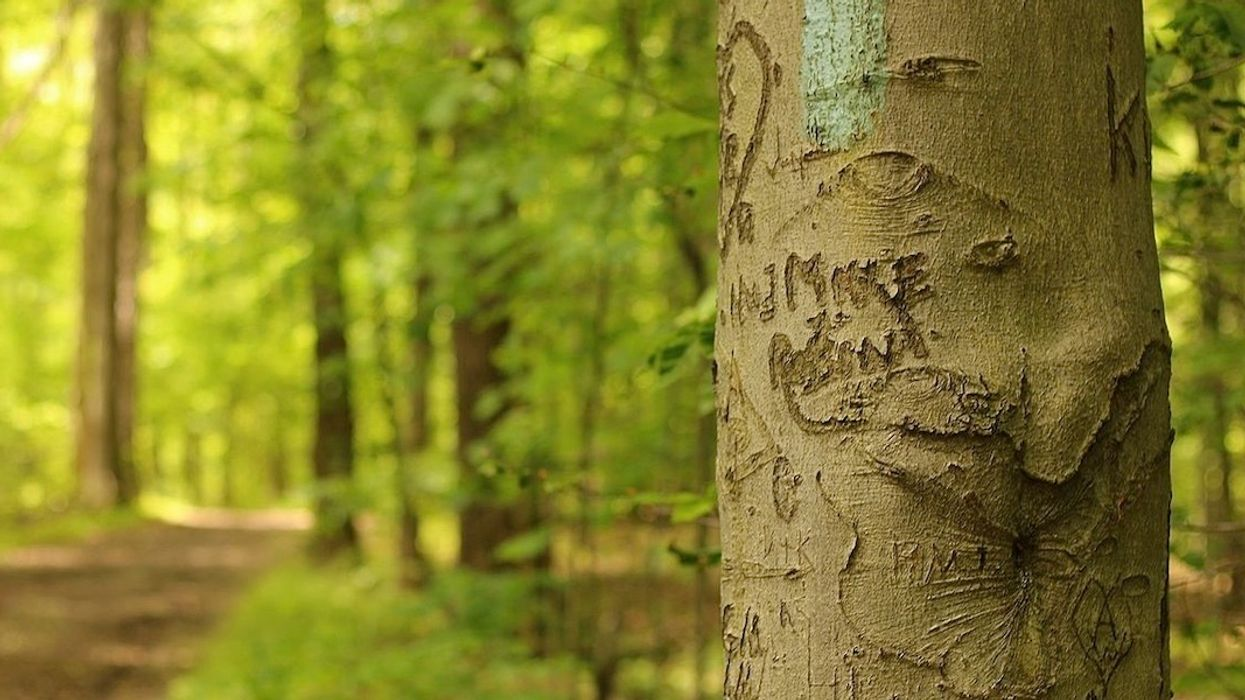 A Mysterious Leaf Disease Is Killing Beech Trees—and It's Spreading