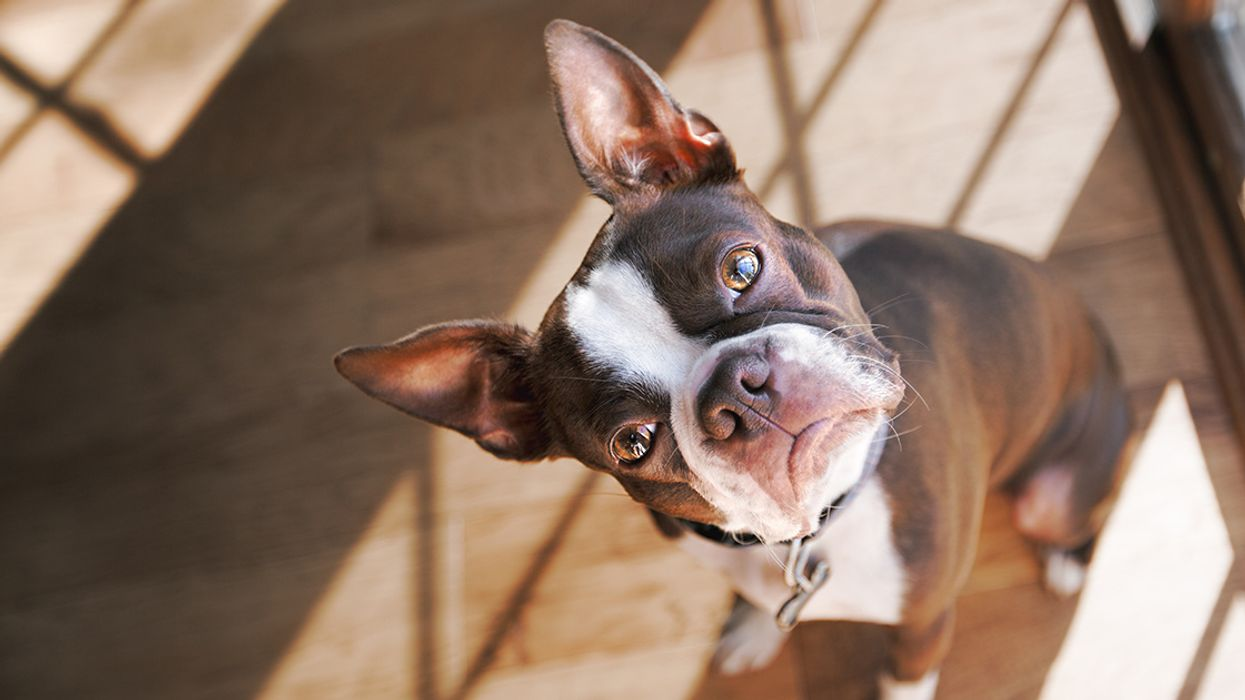 5 Ways to Be an Eco-Friendly Pet Owner
