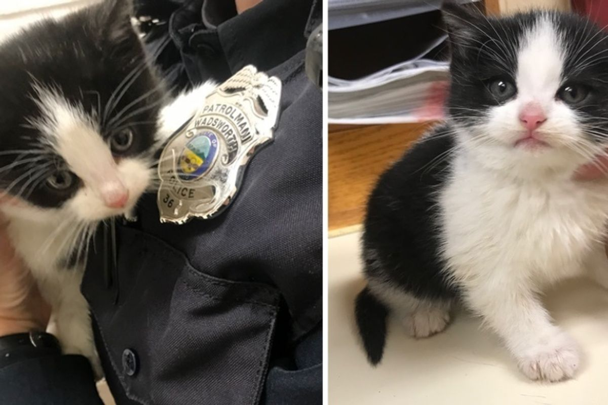 Officer Saves Stray Kitten that Wandered into a House, the Kitty is Determined to Get Adopted