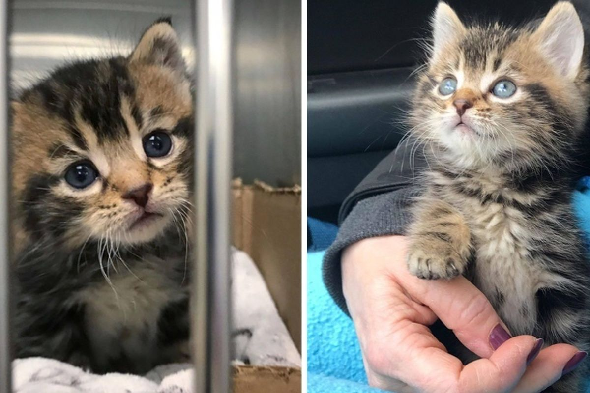 Woman Saves Kitten Found Wandering the Streets Alone, and Changes His Life Forever