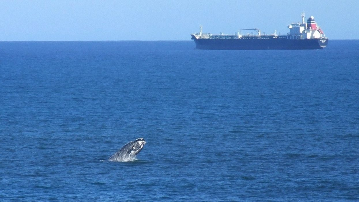 Seismic Blasting Approved in the Great Australian Bight, Posing 'Lethal Threat' to Marine Life