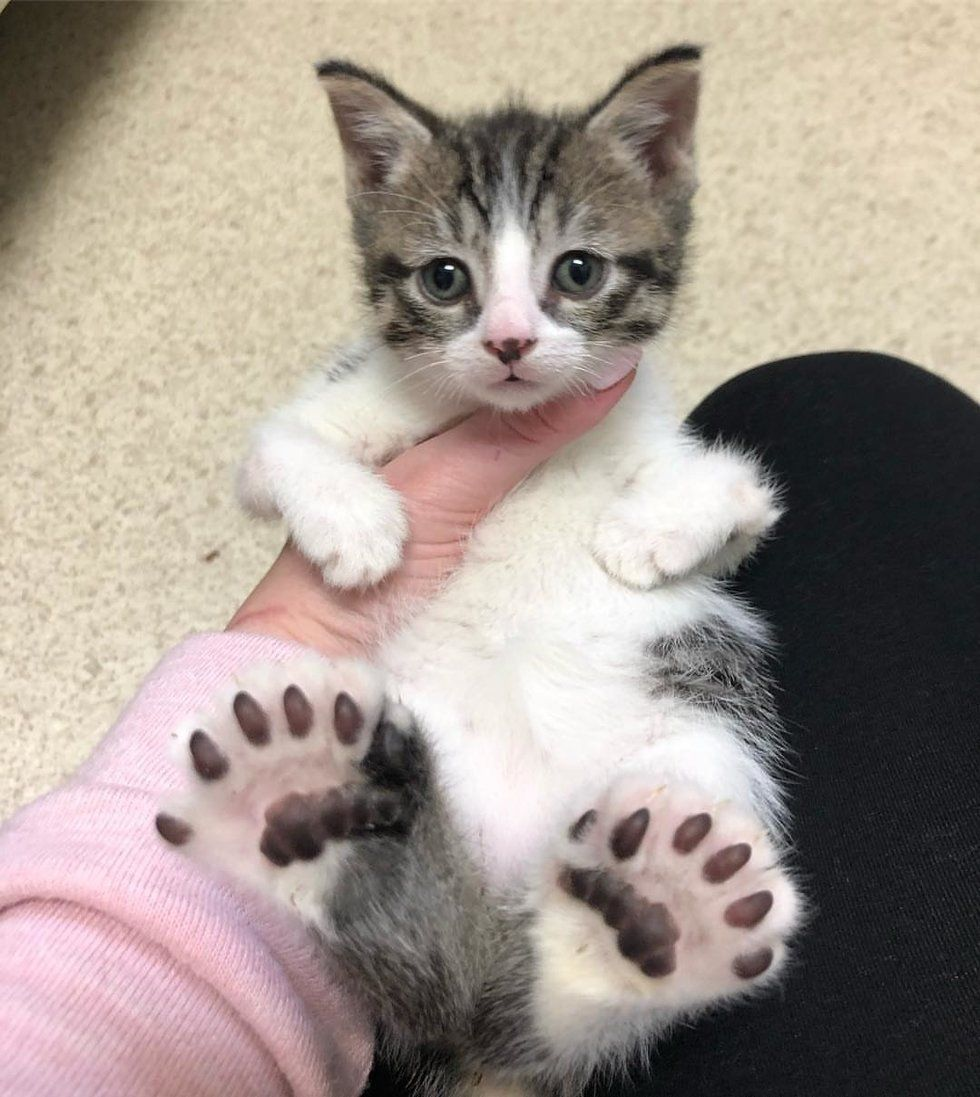 Cat Gets Help for Her Kittens All Born with Large Feet