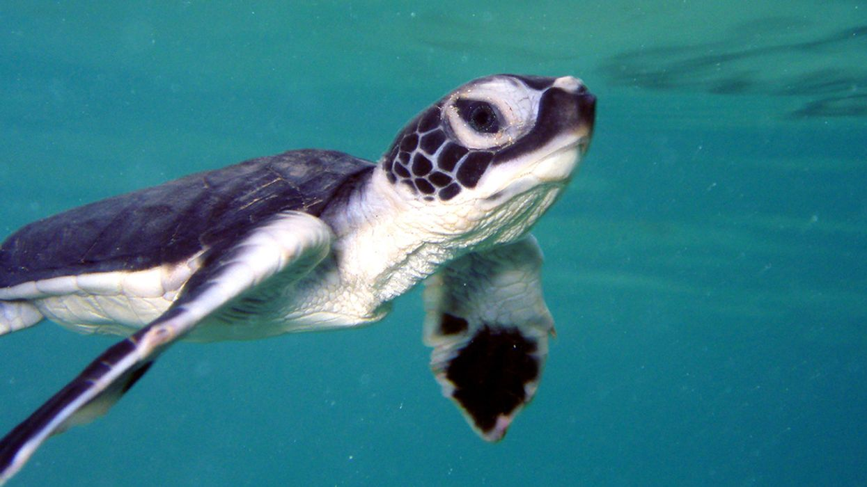 Marine Mammals and Turtles Protected by the Endangered Species Act Are Bouncing Back