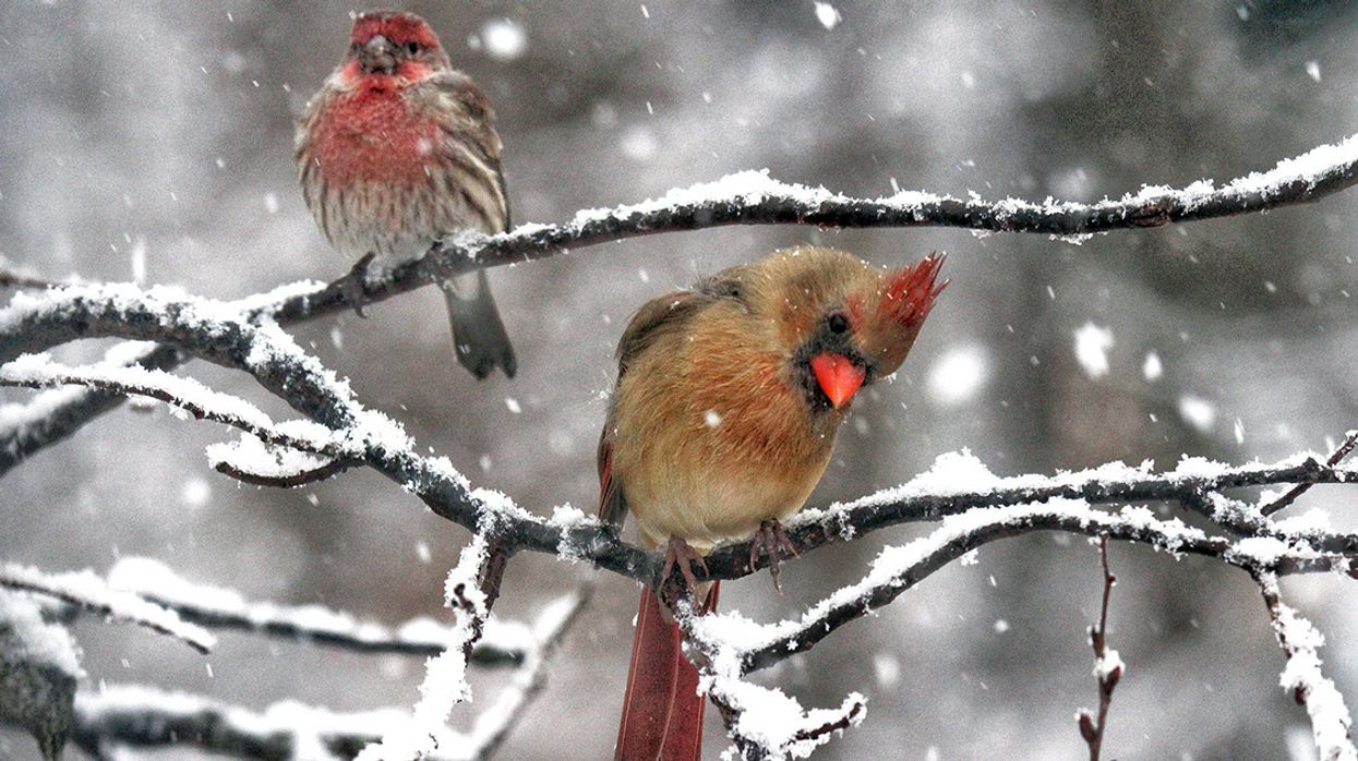Is Winter Miserable for Wildlife?