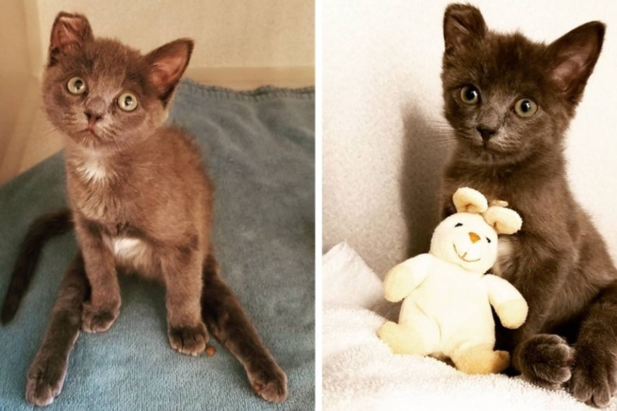 Kitten Who Couldn't Use His Back Legs, Can Feel His Toes Again