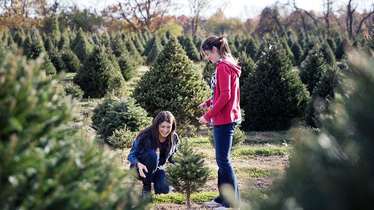 5 Ways to Have a Green Christmas (and Help the Planet)