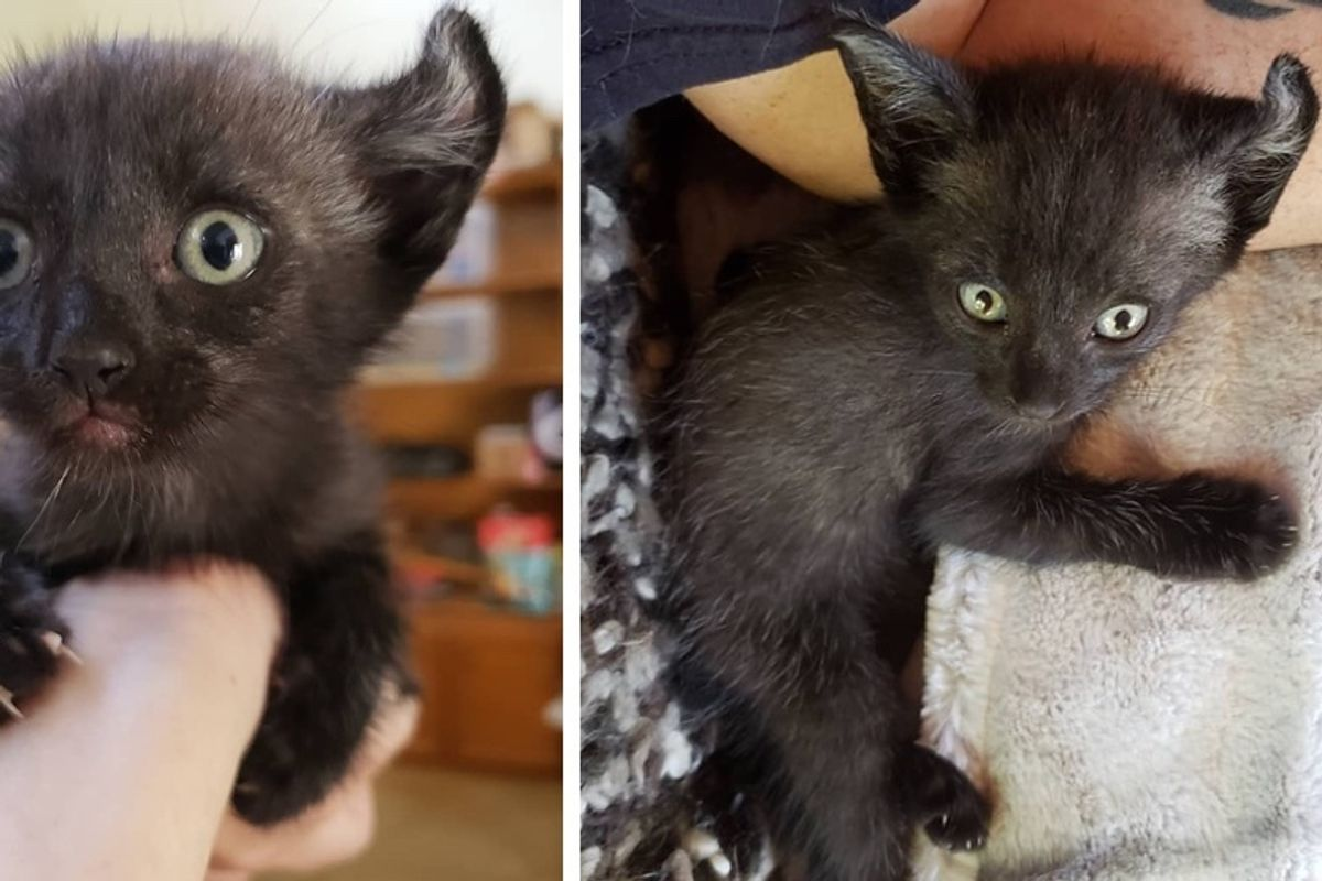 Woman Saves Kitten from Car Engine and Brings Him Back from the Brink - the Kitty Can't Stop Cuddling