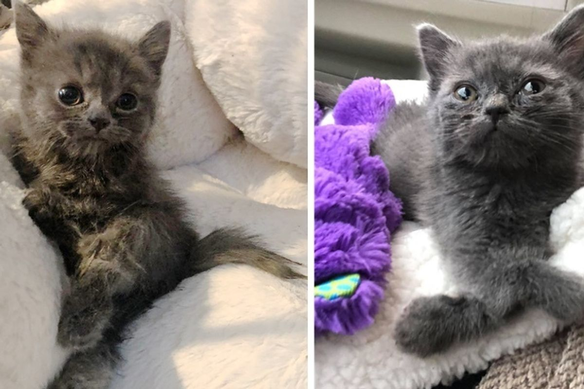 Woman Saves Kitten with Twisted Legs and Tiny Body When Others Have Given Up