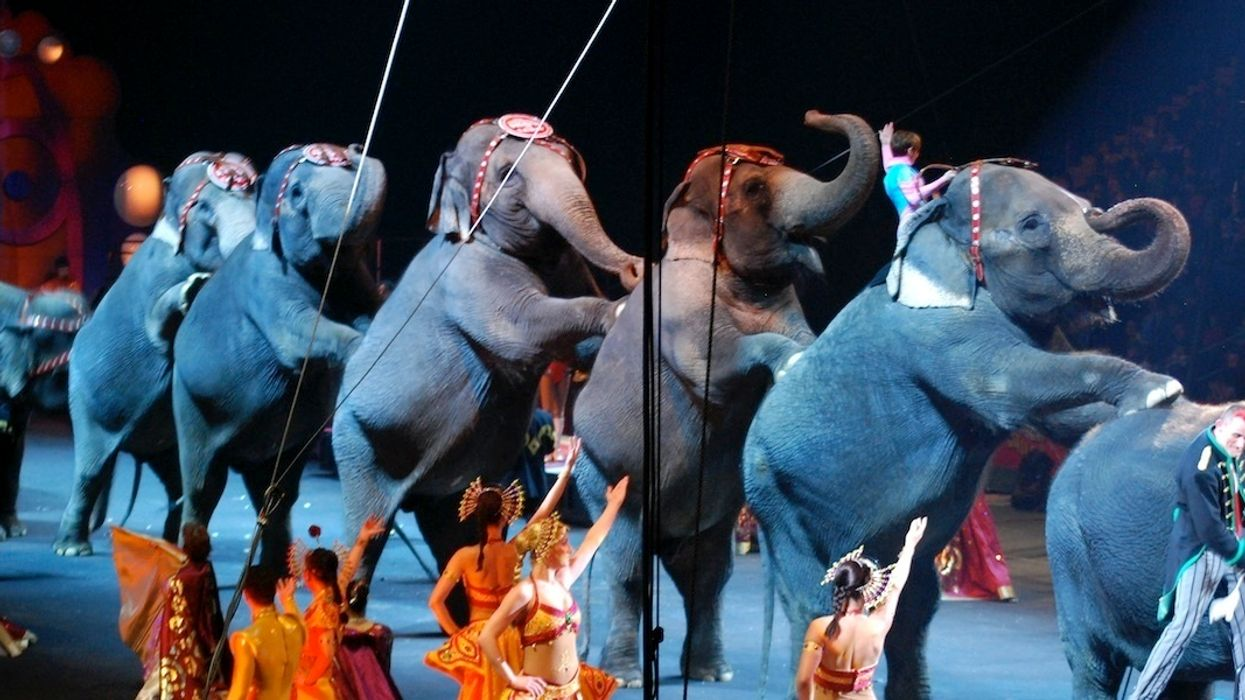New Jersey Is First State to Ban Wild Animal Circus Acts