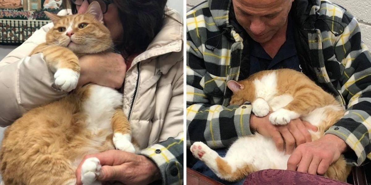 Cat Who Was Rejected for Being a Lap Cat, Finds Family that Loves Him and Can't Stop Cuddling