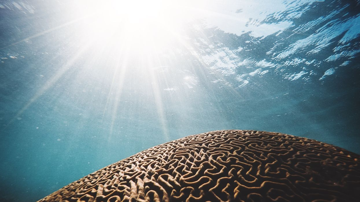 coral underwater with sunlight looks like brain