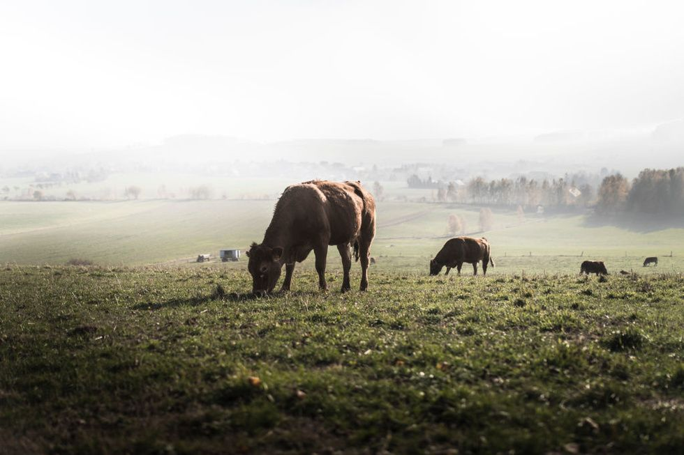Organic farming releases more carbon than conventional foods