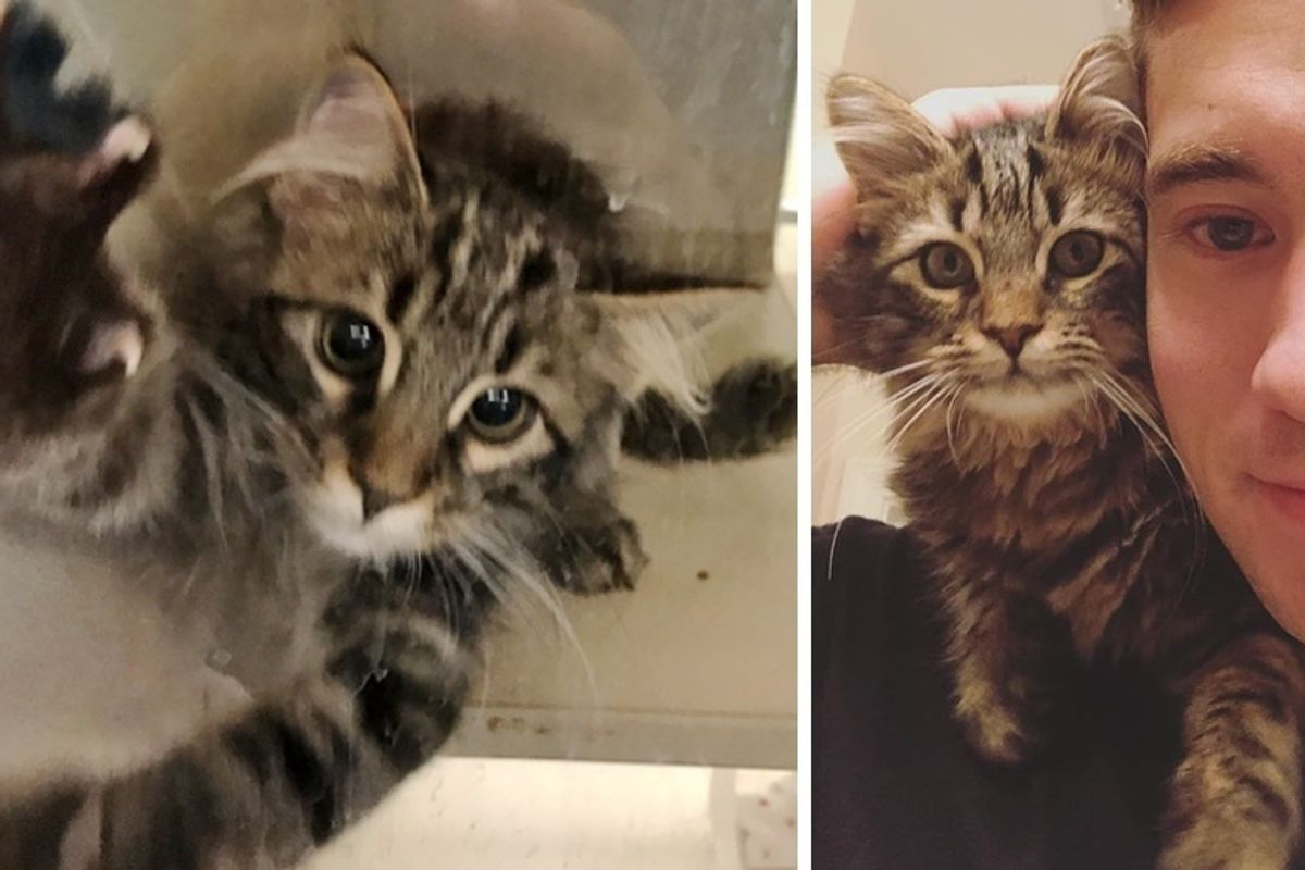 Couple Started Volunteering at Shelter but Found Kitten Waiting for Them