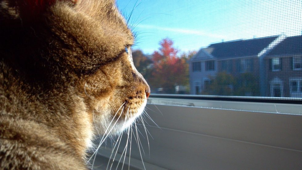 5 Significant Contributions My Cat Makes To My Life That Only A Cat Lover Would Understand
