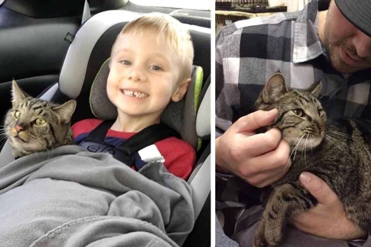 Boy Wrote to Santa About His Lost Cats and Received the Best Gift Ever - He's Been with Them Since Kittens
