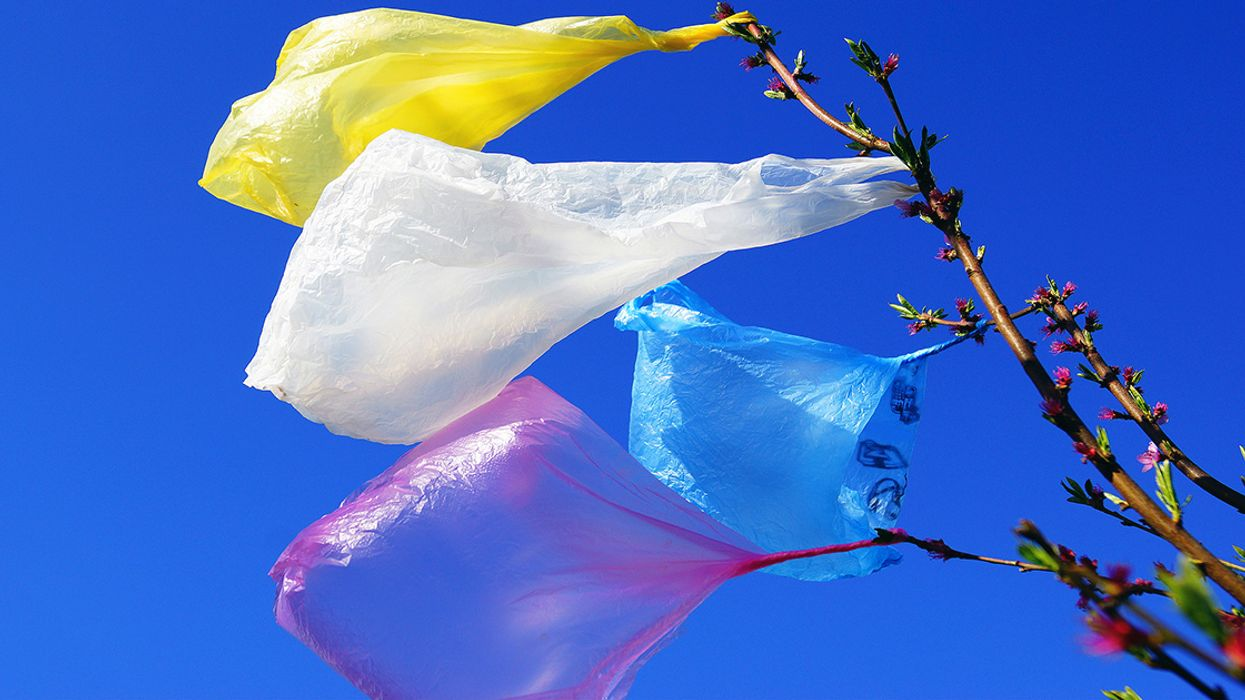Our Complicated Relationship With Plastic: 5 Essential Reads