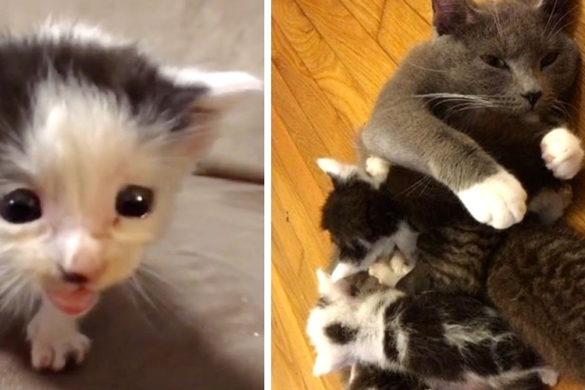 Cat Who Needed Kittens, Becomes Mom to Kitties Abandoned Outside Library
