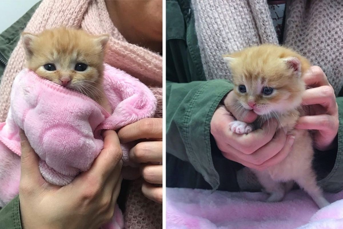 Kitten Saved from Bitter Cold Has Her Life Turned Around This Holiday Season