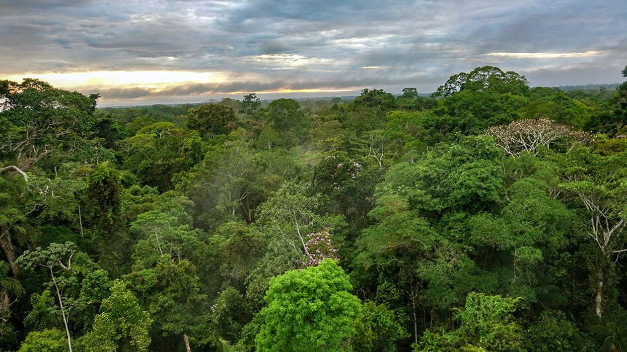 10 Most Intriguing Forest Stories of 2018