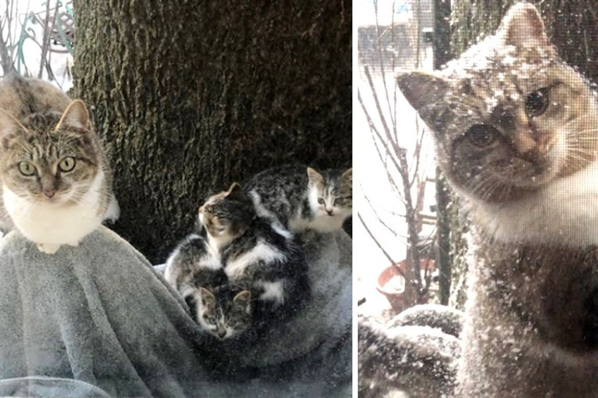 Stray Cat Left Her Kittens to Couple for Help and Came Back During Extreme Cold Weather