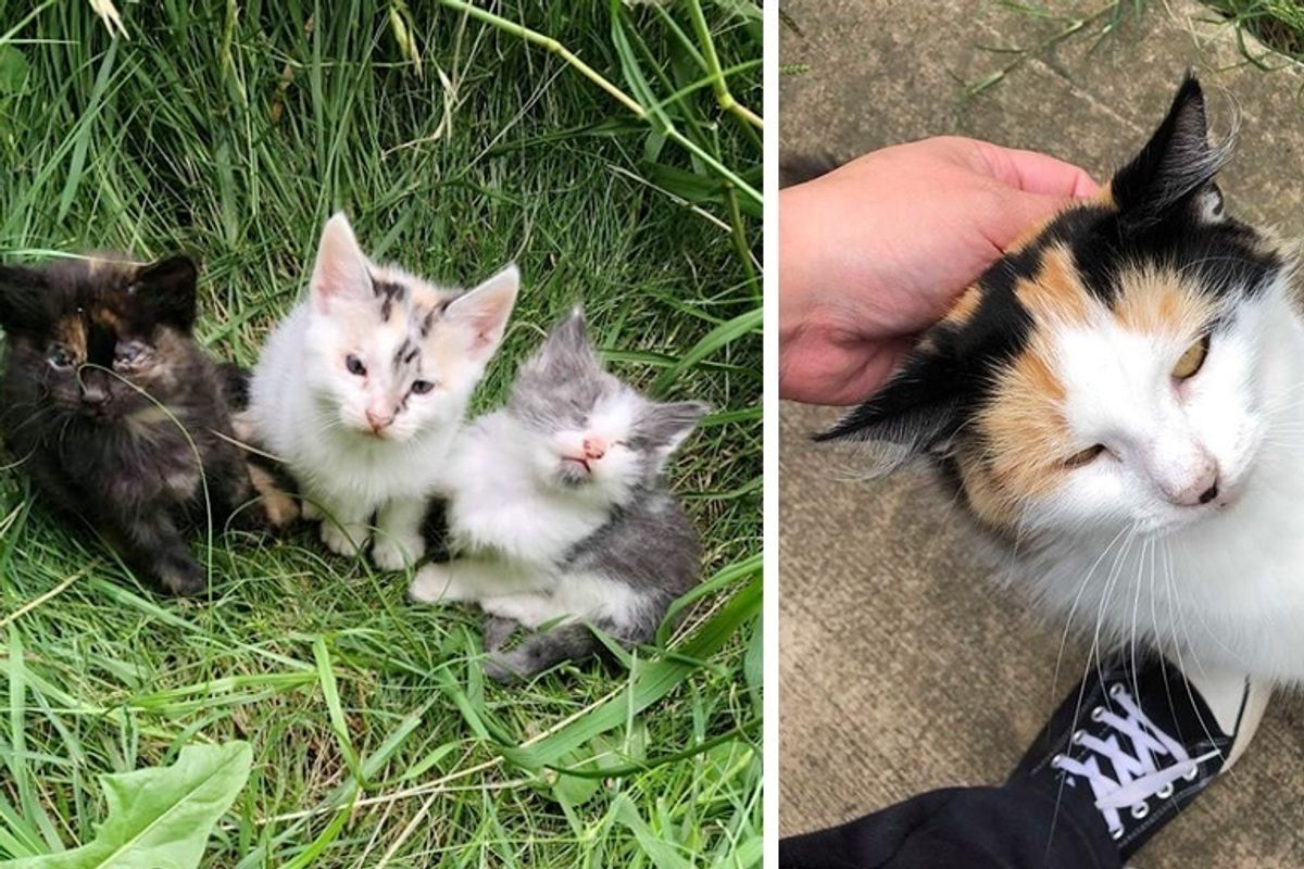Stray Cat Walks Up to Rescuer and Leads Her to Her Kittens Who Need Help
