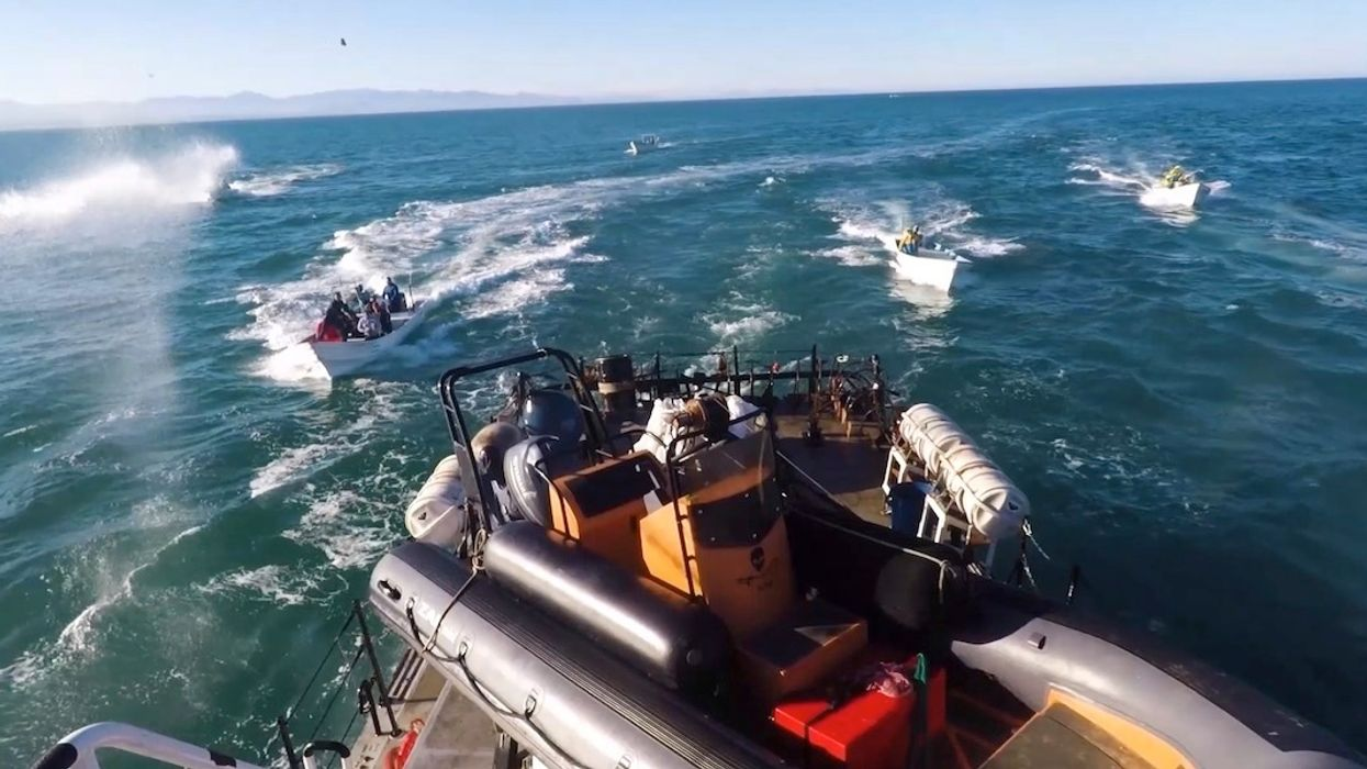 Sea Shepherd Ship Attacked by Rocks, Molotov Cocktails in Vaquita Refuge