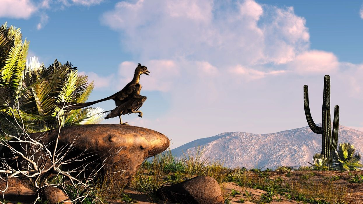 Famous fossil is not an Archaeopteryx feather after all