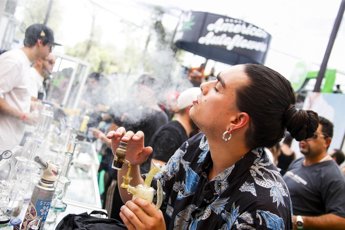 L'Olanda darà al ministro Giulia Grillo più di 700 chili di cannabis all'anno