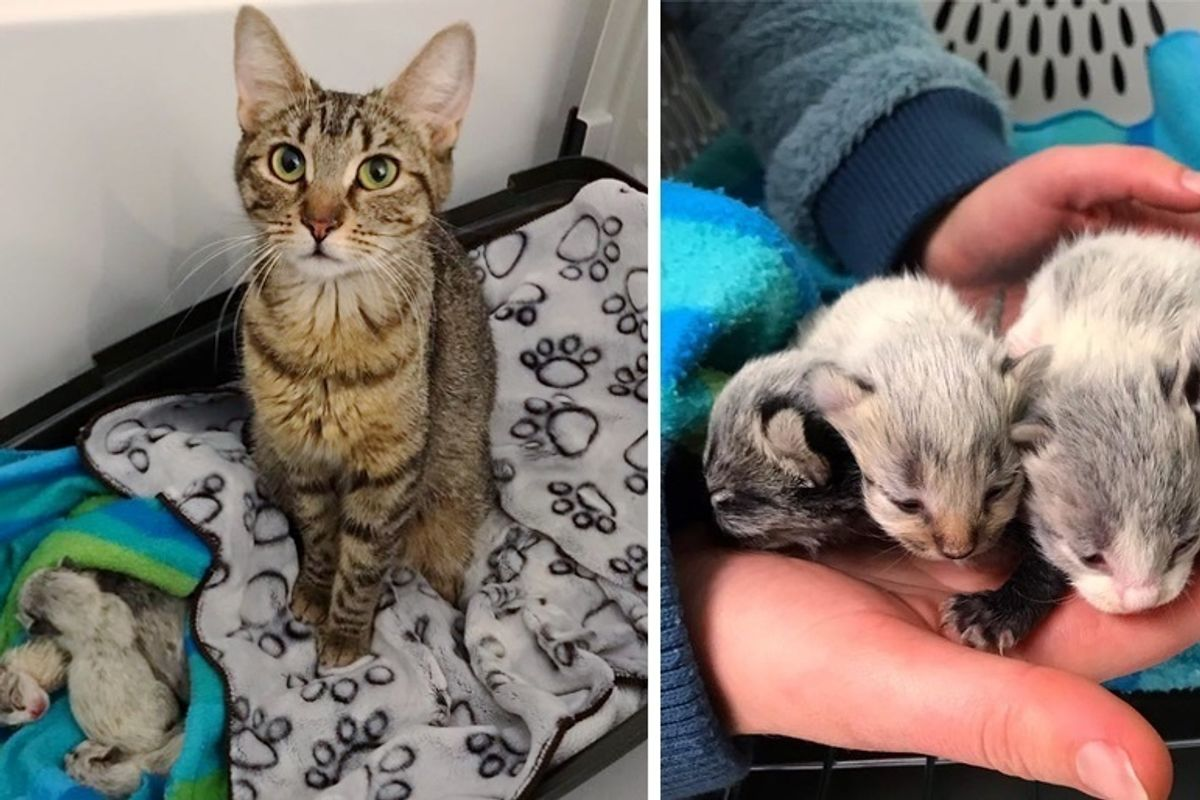 Shelter Cat Gets Help for Her Newborn Kittens When Someone Saves Them Just in Time