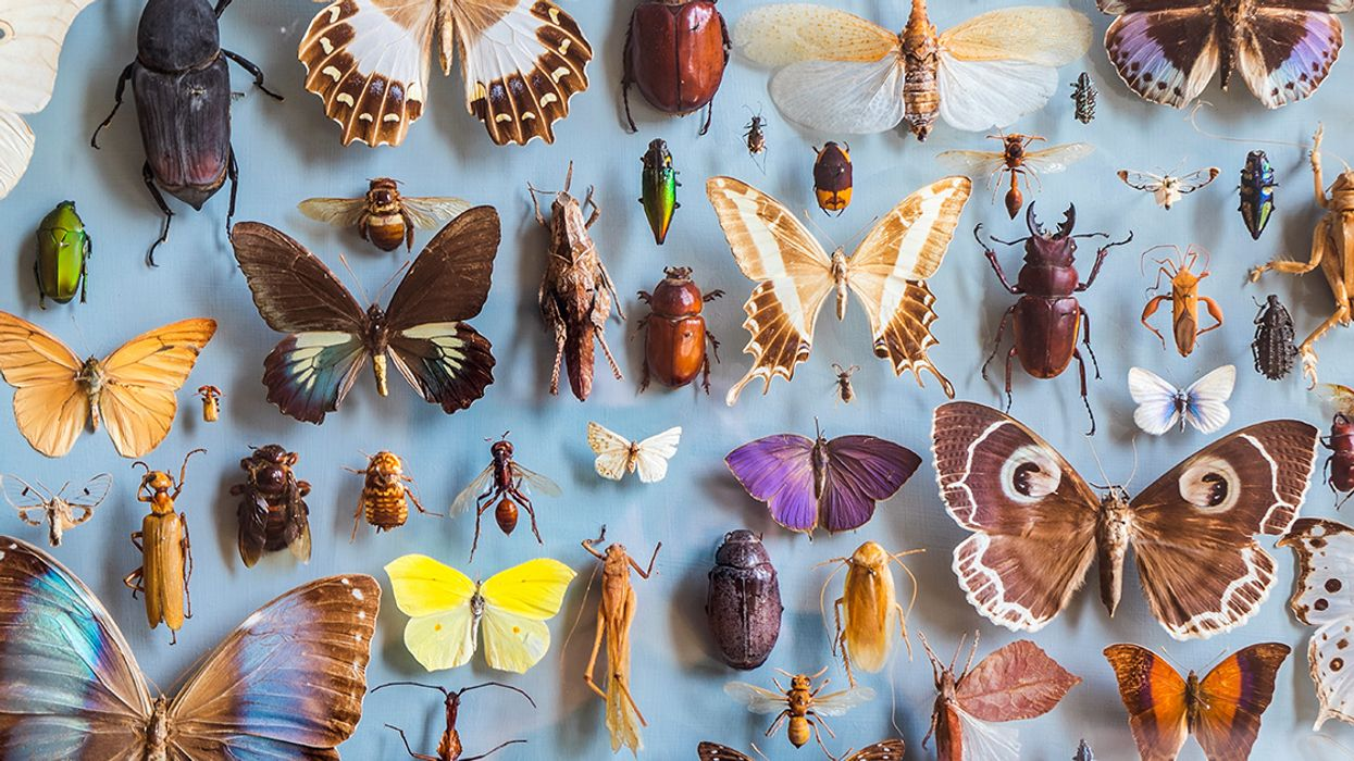 Insects Could Go Extinct Within a Century, With 'Catastrophic' Consequences for Life on Earth
