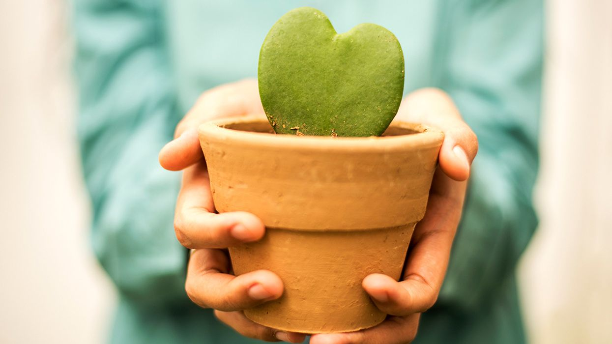 5 Eco-Friendly Valentine's Gift Ideas