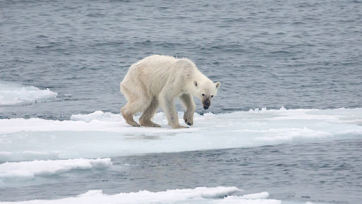 Russian Polar Bear 'Invasion' Is a Sign of Something Much Bigger