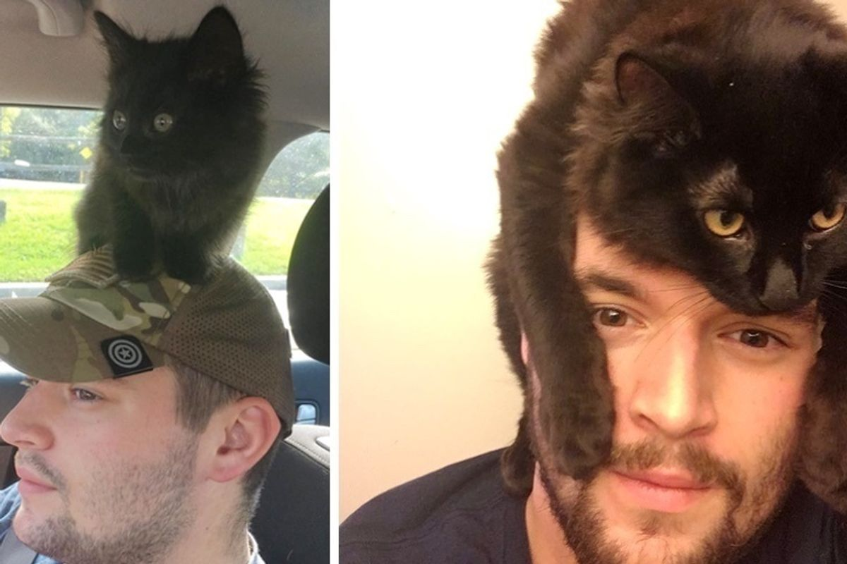 Man Gave Farm Kitten a Home, the Kitty Hopped on His Shoulder and Wouldn't Leave Him