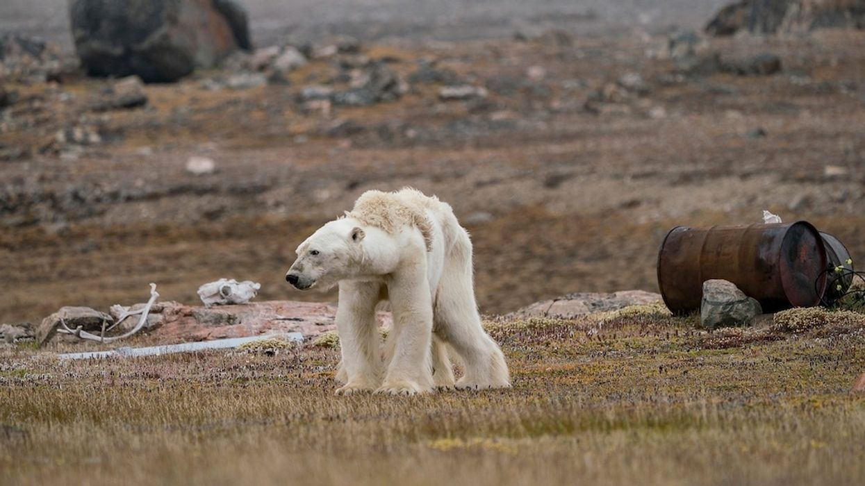 Top Wildlife Photographs Include Heartbreaking Polar Bear, Heartwarming Lions