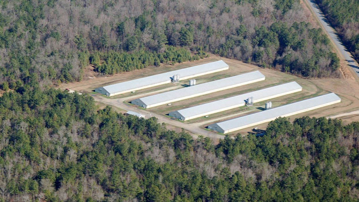 New Investigation: Surge of Poultry Factory Farms in North Carolina Added Waste From 515.3M Chickens to That of 9.7M Hogs